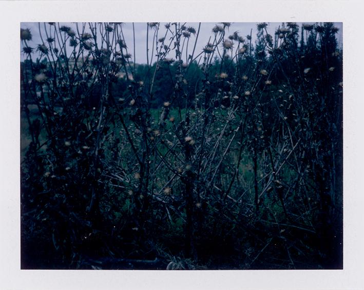 Dark color polaroid of thorny plants