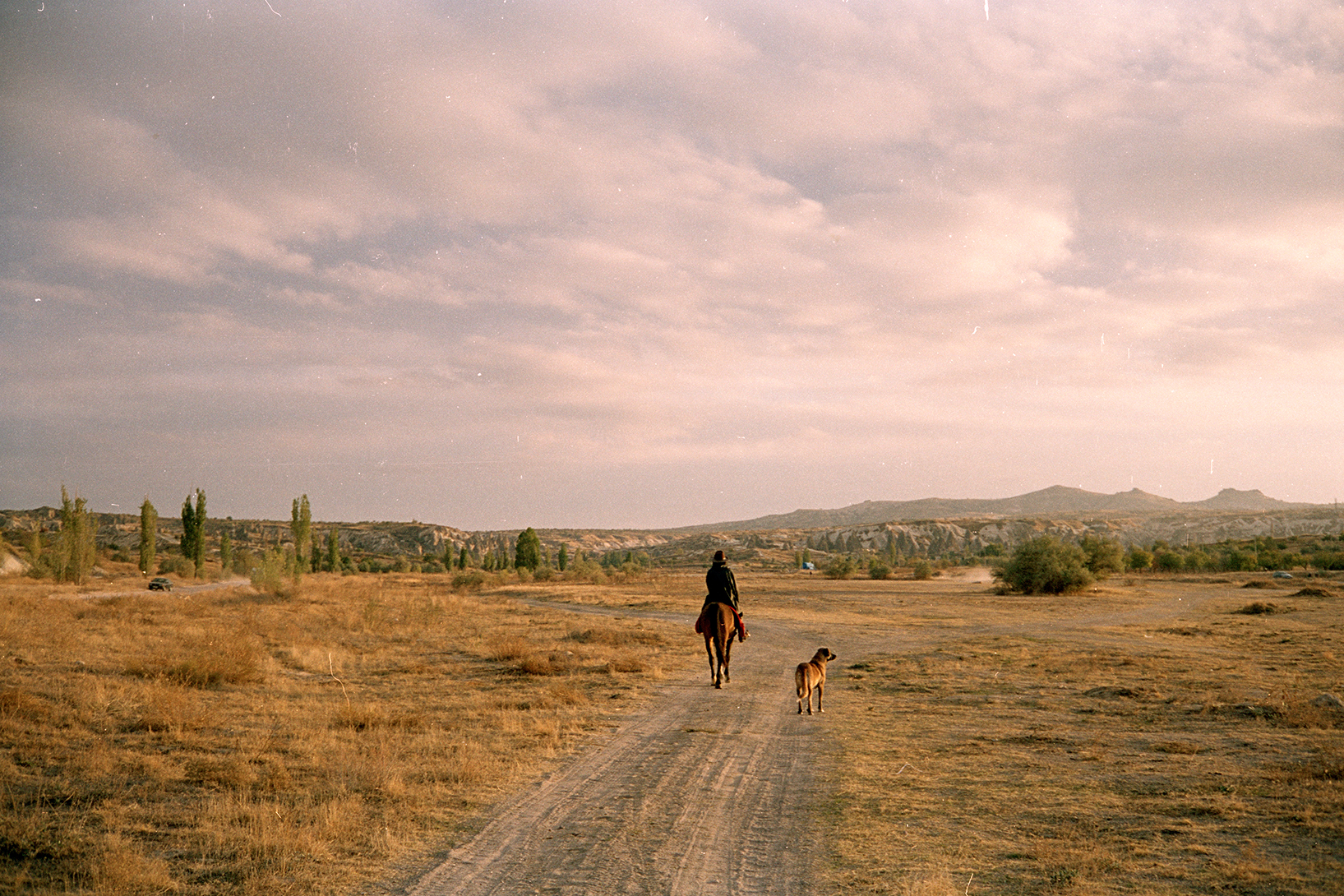 Man reading a horse with dog accompanying him in sunset lit field