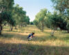 Man kneeling to examine wild flower in olive orchard by Nadine Nashef