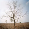 Leafless tree standing in barren field